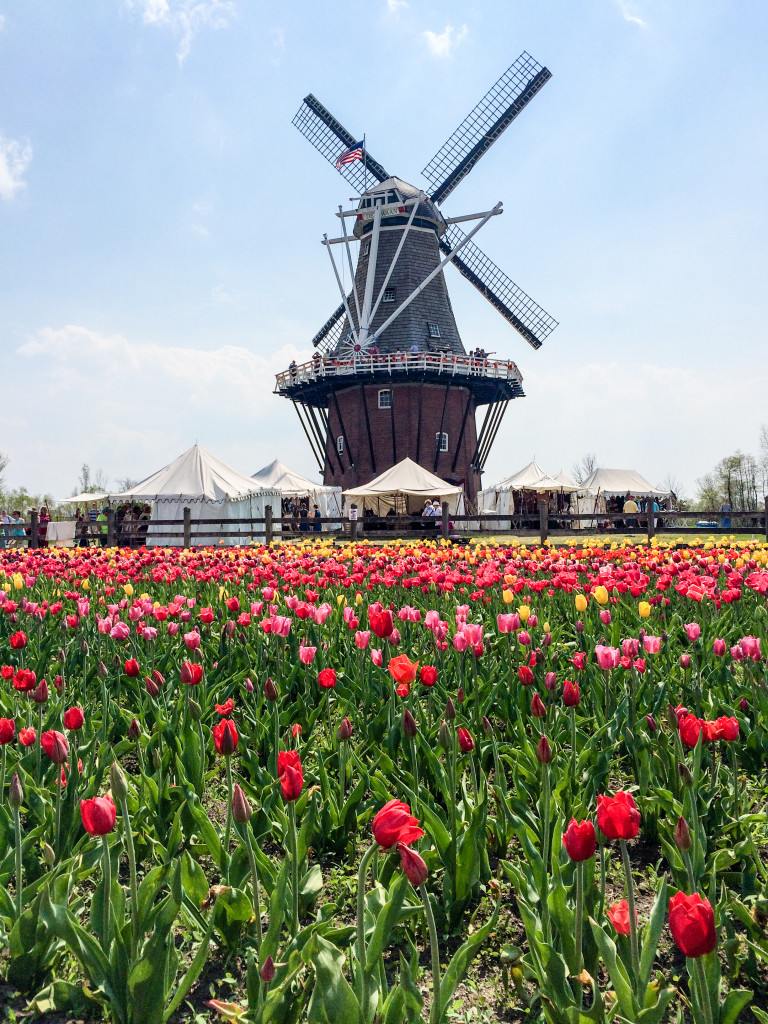 Windmill Island Gardens during Tulip Time Festival (Erin Klema/The Epicurean Traveler)