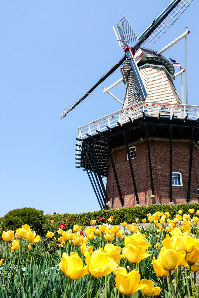 De Zwaan at Windmill Island Gardens in Holland, Mich. (Erin Klema/The Epicurean Traveler)