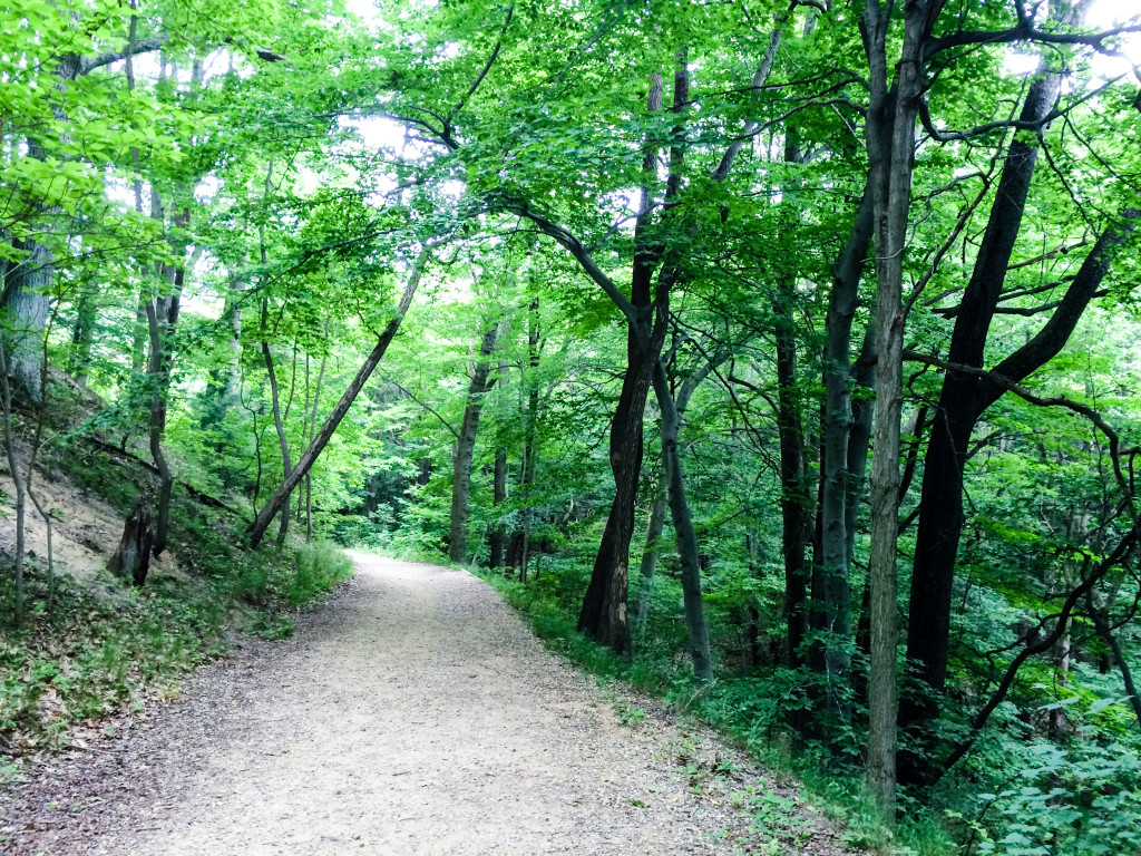 A trail winds through the woods to the beach at Saugatuck Dunes State Park in Saugatuck, Michigan.