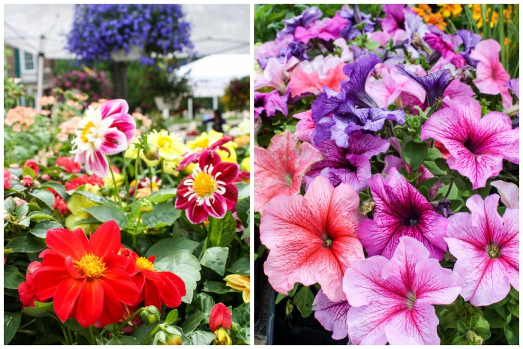 Flowers for sale at the Dane County Farmers' Market in Madison, Wisconsin (Erin Klema/The Epicurean Traveler)