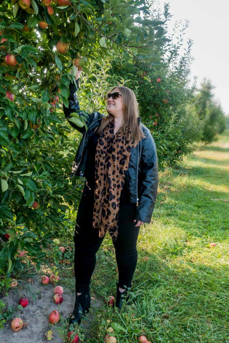 Picking apples at a U-pick orchard is always a fun fall activity!