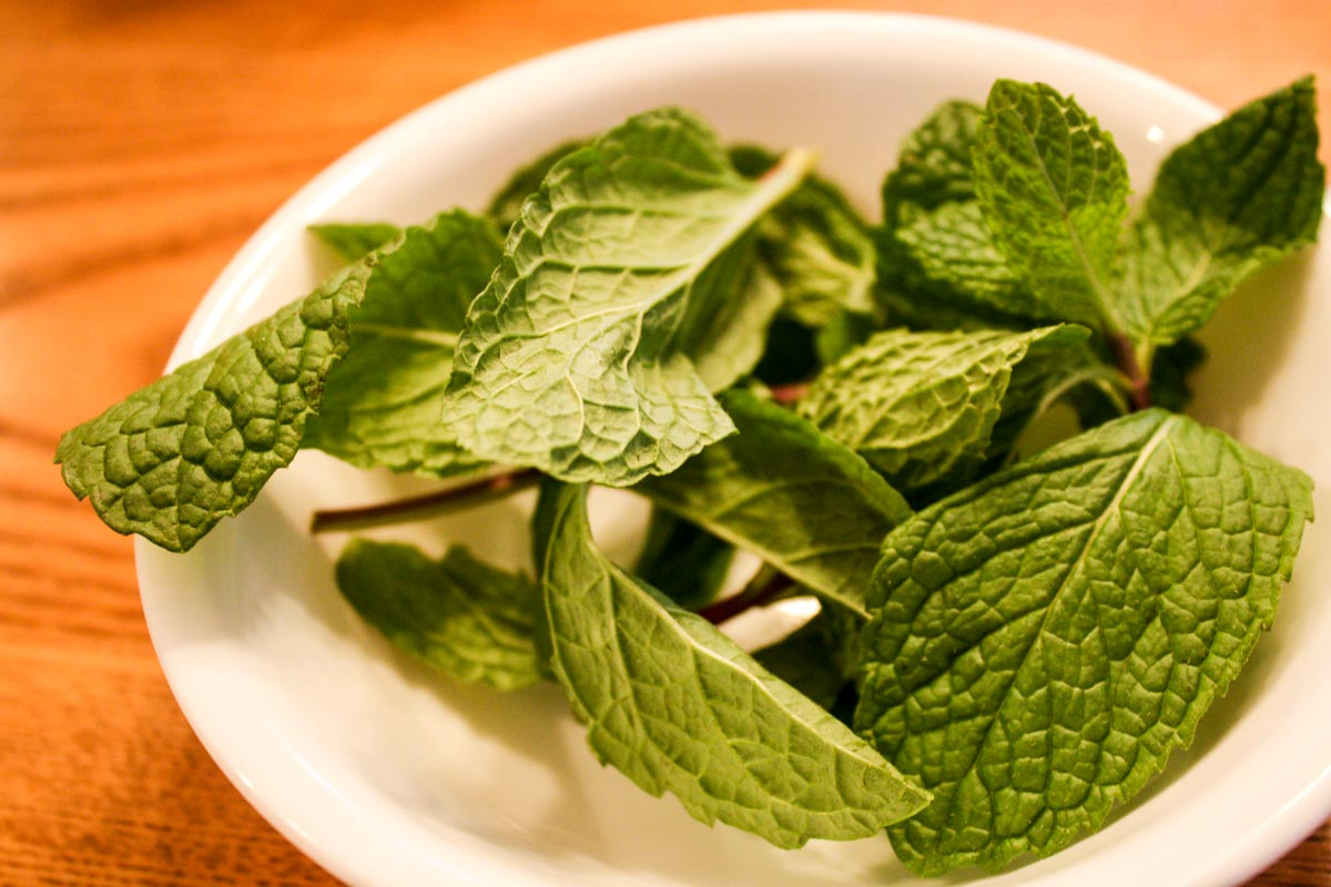 White bowl filled with sprigs of mint leaves
