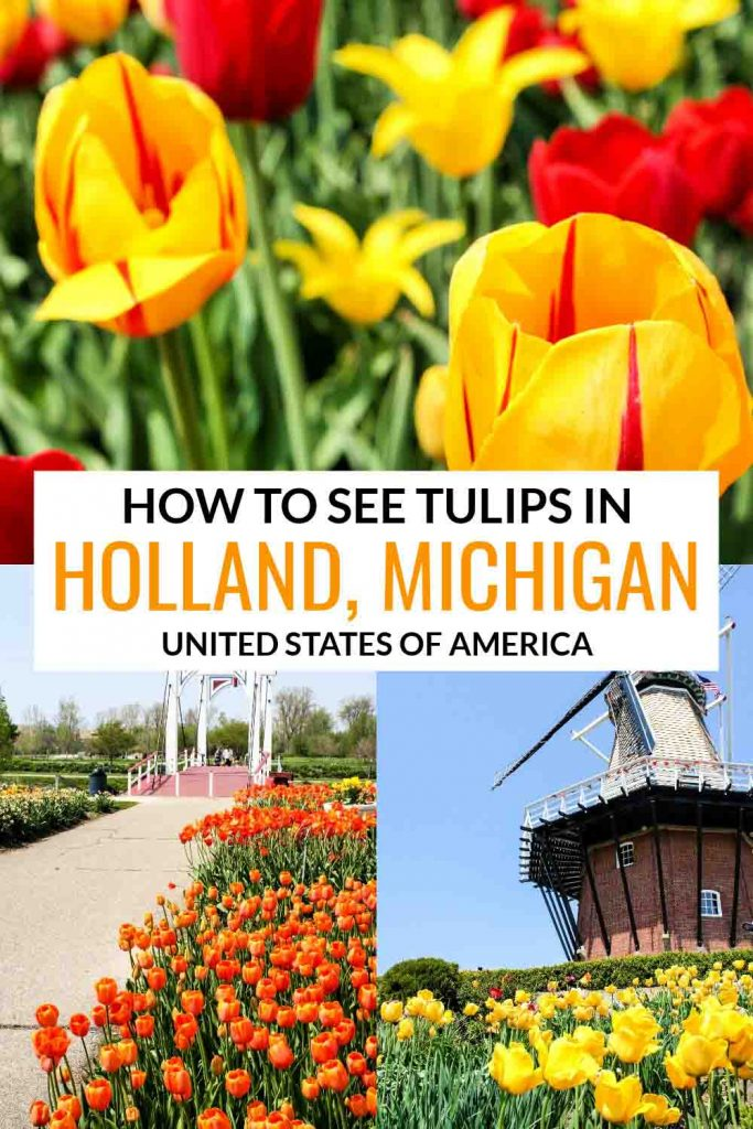 How to See Tulips in Holland, Michigan