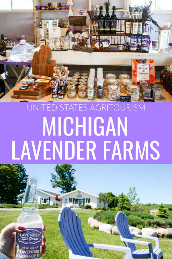 Eight Beautiful Lavender Farms To Visit In Michigan