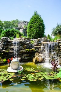 Lily-pad pond at Oliver Winery in Bloomington, Indiana