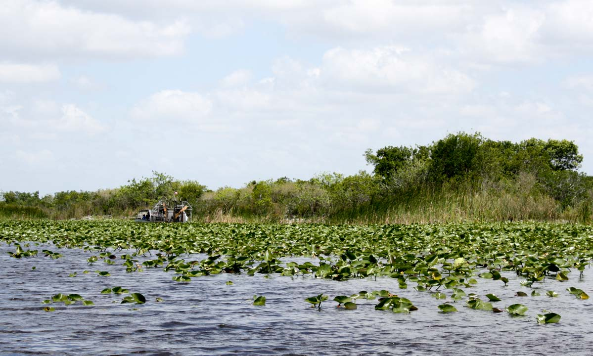 Airboat glides through the Everglades in Florida