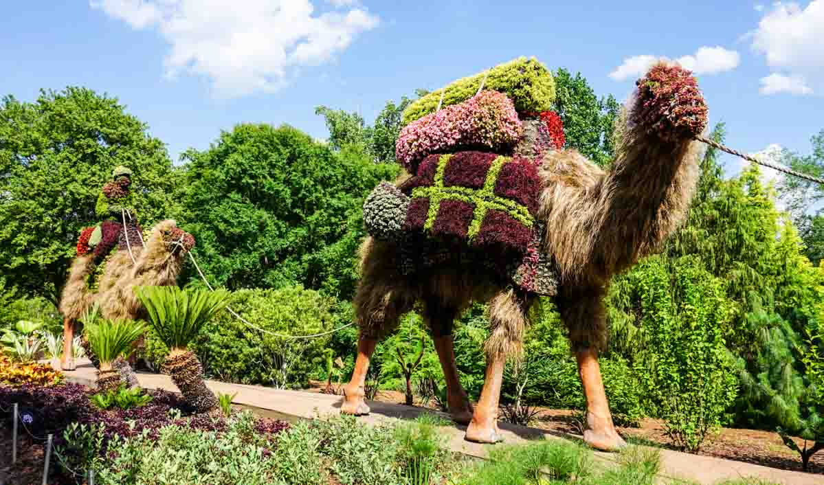Atlanta Botanical Garden living sculptures of camels