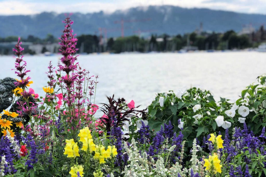 Colorful flowers in front of a lakefront in Zurich, Switzerland